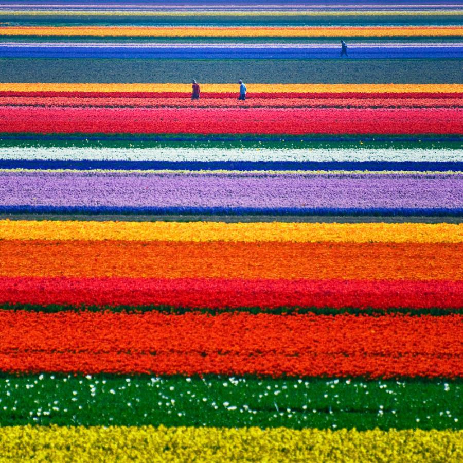 Campos de tulipanes de Keukenhof